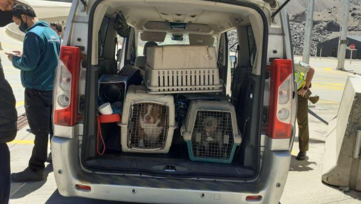 25 cachorros que entraban al país de forma ilegal fueron rescatados