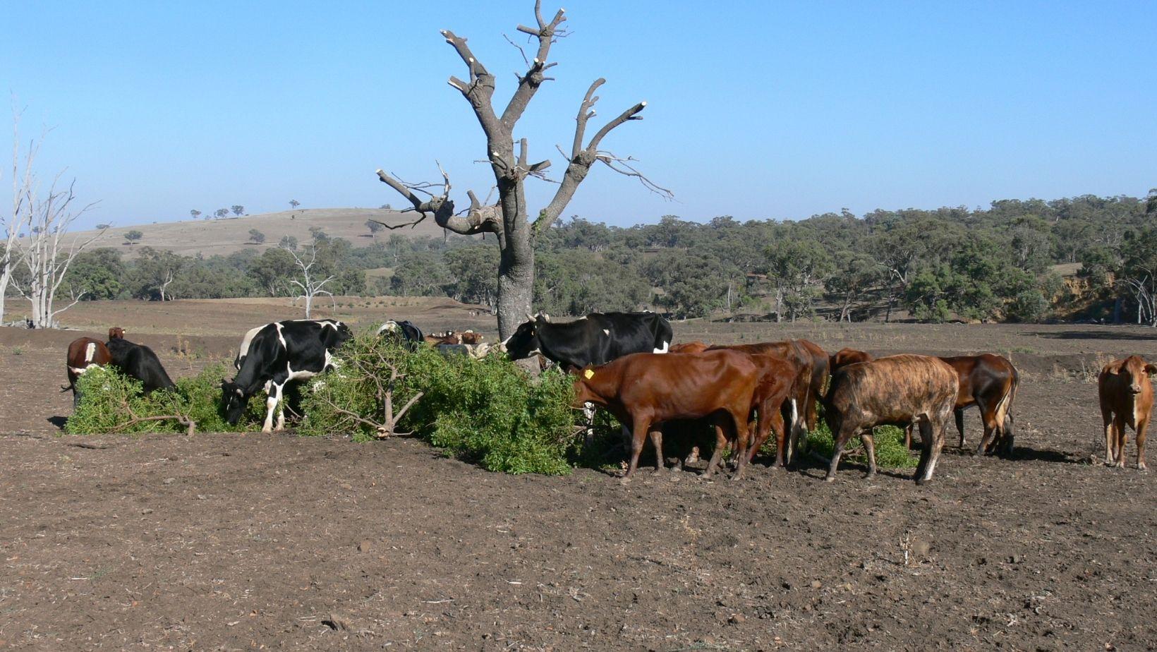 De sequía a aridez: el difícil panorama de nuevo año más seco