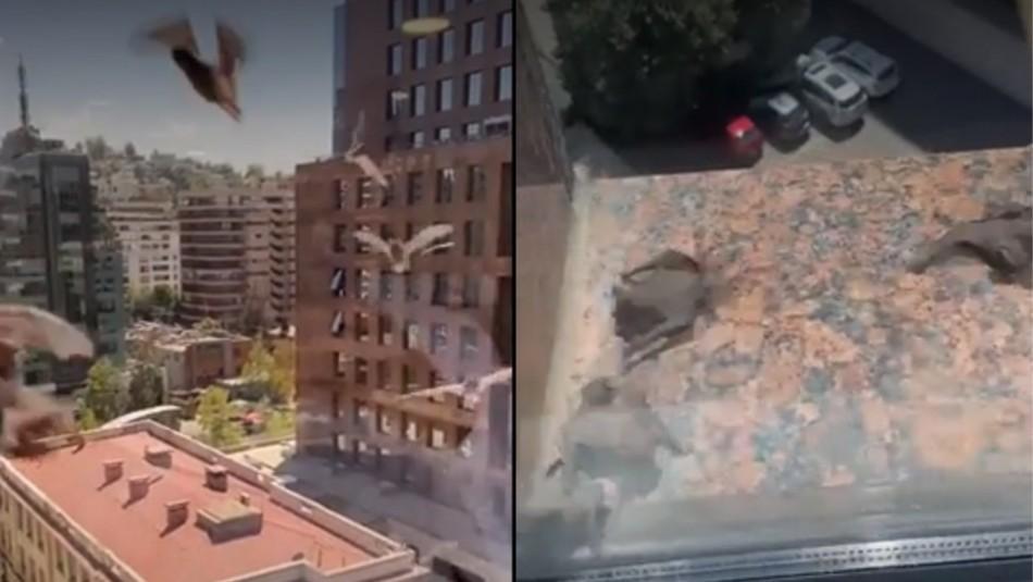 Video registró plaga de murciélagos que afecta a vecinos de Las Condes
