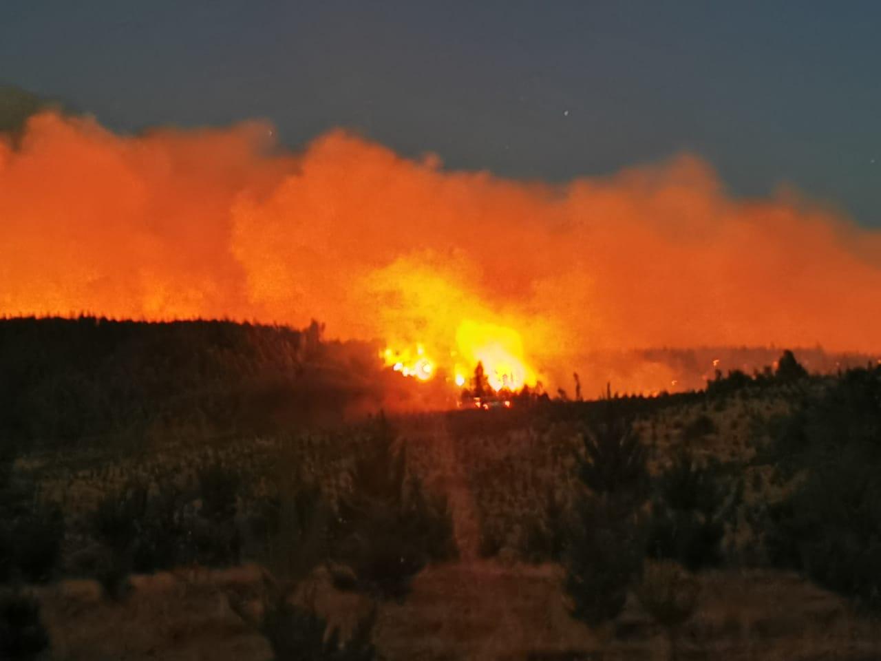 Nacimiento: 20 familias evacuadas y 300 hectáreas destruidas deja incendio forestal