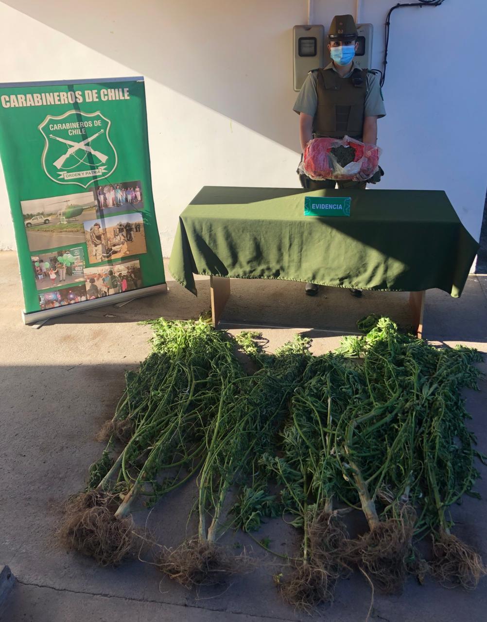 Los Ángeles: detienen a hombre con 3 mil dosis de marihuana