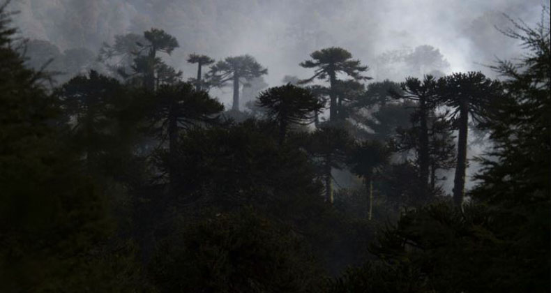 Conaf cierra parques nacionales por fuertes lluvias: hay uno del Biobío