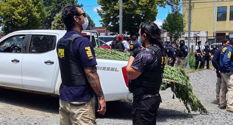 Operativo en Ercilla que dejó un PDI muerto: incautaron cerca de mil plantas, siete armas y 12 millones
