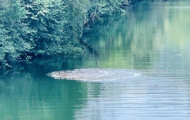 Extraño fenómeno en el fondo del río Huequecura de Santa Bárbara