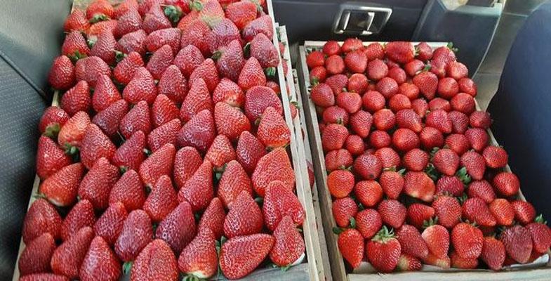 Los Ángeles: sorprenden a dos sujetos robando cajas de frutillas de un camión