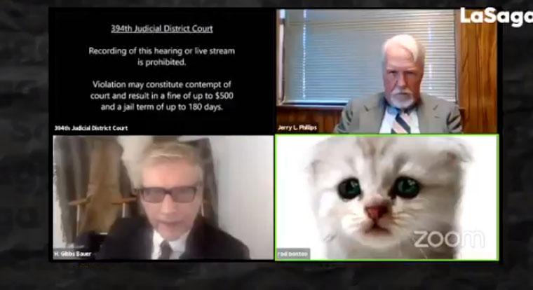 «Estoy aquí»: Abogado se 'transformó' en gato en plena audiencia judicial