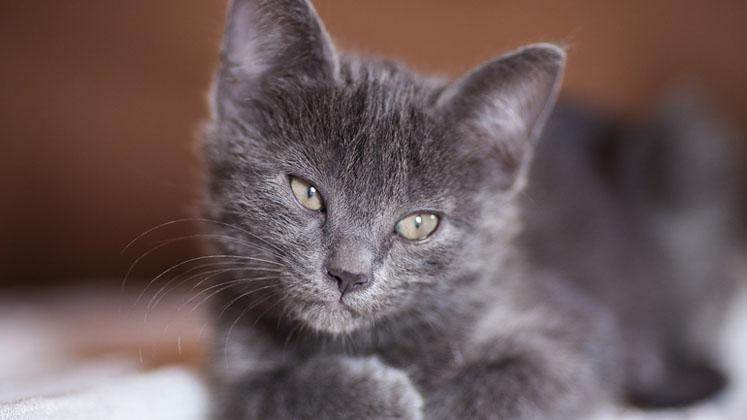 Master Cat retira lote de alimento por denuncias: generarían grave malestar en gatos